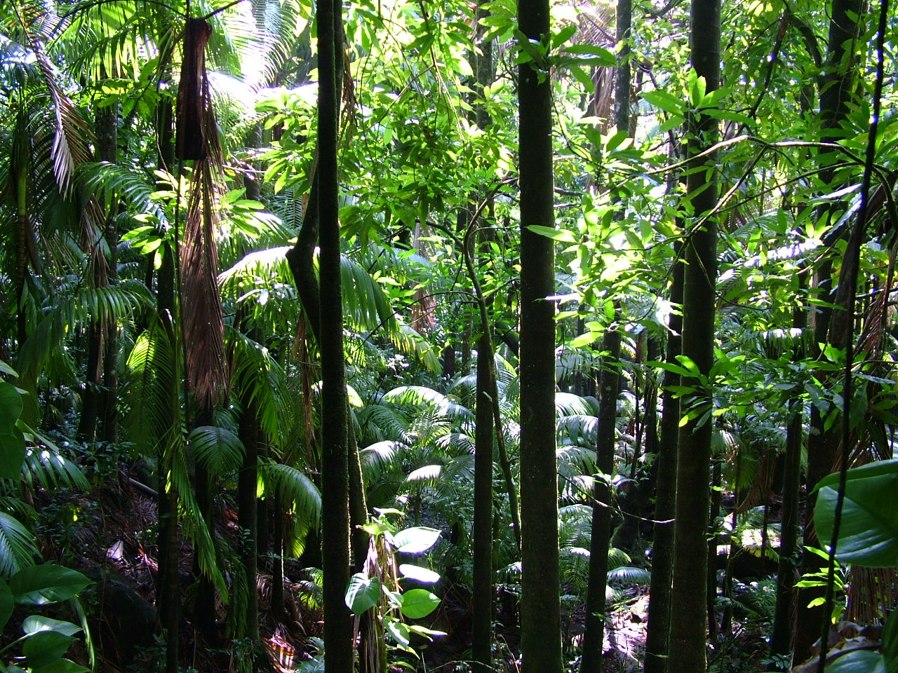 an examination of rainforests Forests by almost five percent (an estimated 3000 cubic kilo- meters [km 3 ] per year of a global terrestrial derived total of 67,000 km 3 ), with little sign of slowing (gordon et al 2005).